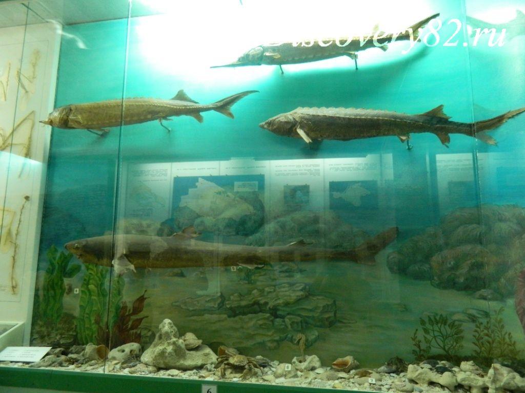 музей черноморск крым