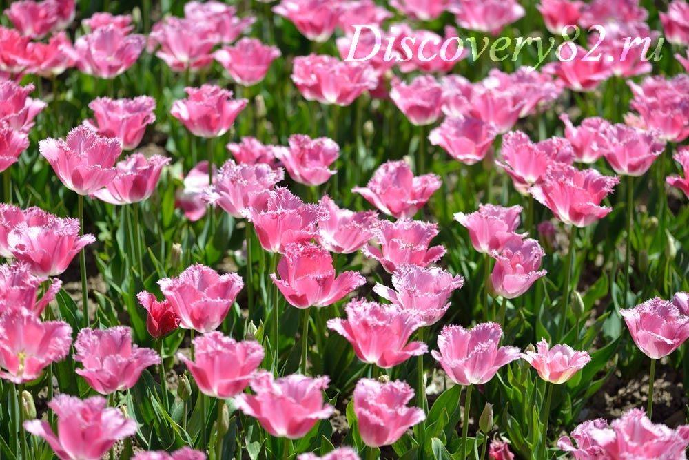 botanicheskii-sad30