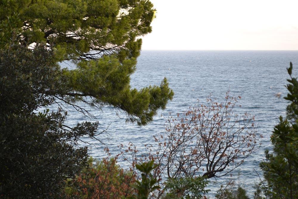 Вид на море из парка