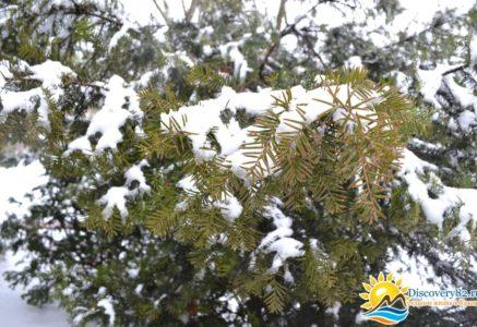 Сегодняшний снег в Крыму, фотогаллерея